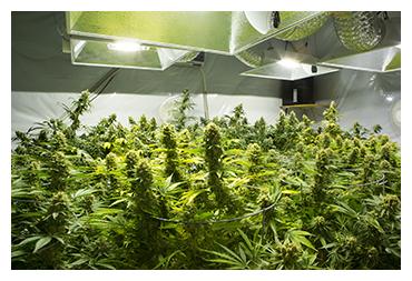 Fort Worth Marijuana Lawyer - Marijuana Possession Lawyer